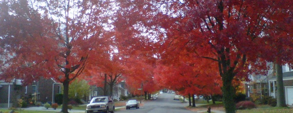 A Vision In Red! Staten Island's North Shore~Westerleigh~