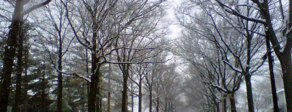 Tunnel of snow covered trees in S.I.'s North Shore. So Beautiful!