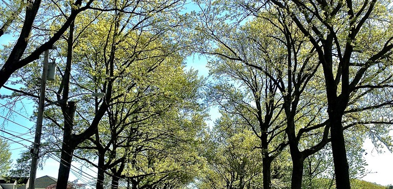 87_Natures Tunnel Of Trees........