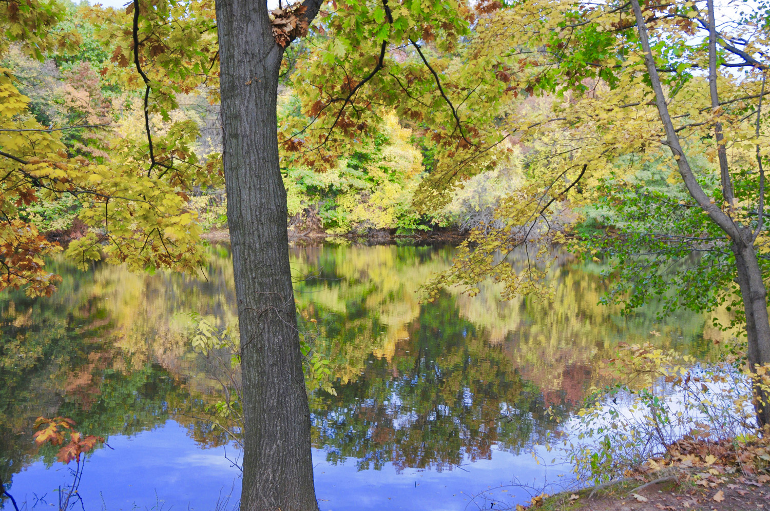 Clove Lakes Park in the Fall